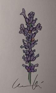 LavendelIsabellaKilenstam